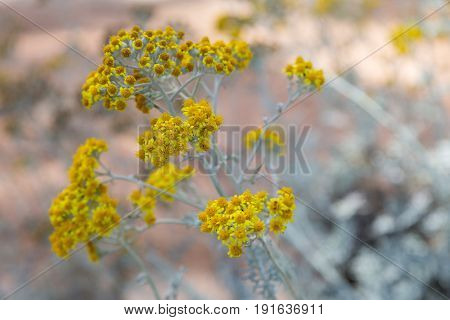 a flowers yellow chamomile with blue background