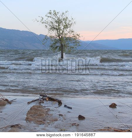 Tree In Water With Splashing Waves On Tree Trunk