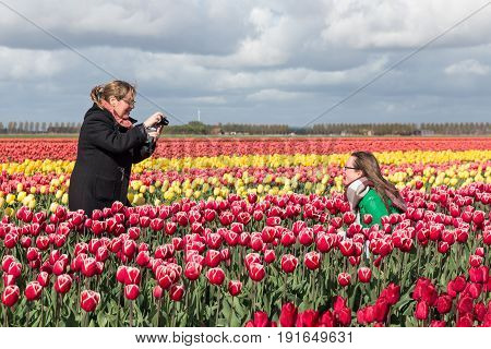 ESPEL THE NETHERLANDS - APRIL 22 2017: Two woman are taking pictures in colorful tulip fields of The Netherlands