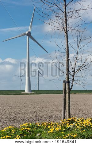 Dutch landscape with bare tree wind turbines and stripes of plowed field in early spring