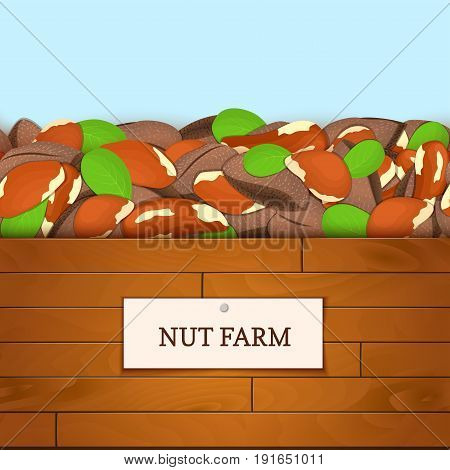 Wooden box with braziian nuts. Vector illustration. Boards wood background, border with brazilnut fruit and label. For the design of packaging, food breakfast