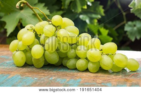 Healthy fruits fresh White wine grapes on the table in the vineyard wine grapes green grapes plant background ready to eat new harvest