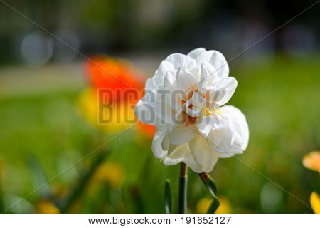 Beautiful Single White Flower In The Park In Spring