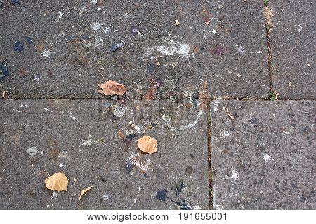A dirty concrete sidewalk with leaves and bird poo