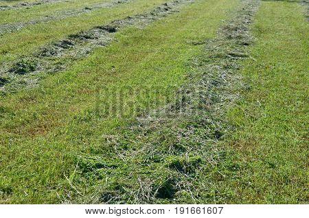 Traditional dry grass South Bohemia. czech republik