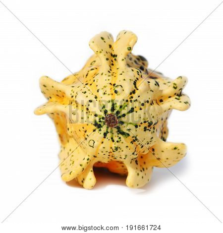 Unusually shaped fruit of an autumn squash isolated on white