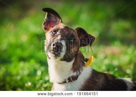 Cute portrait of dog on the grass.Pet on the nature background.