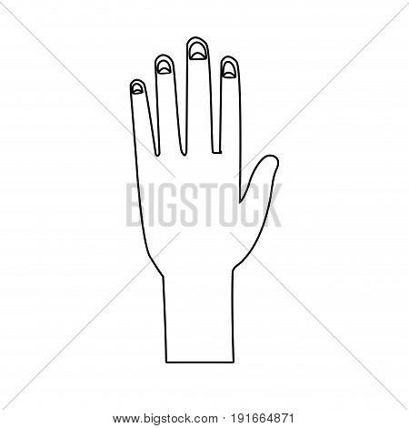 human hand palm show five finger vector illustration