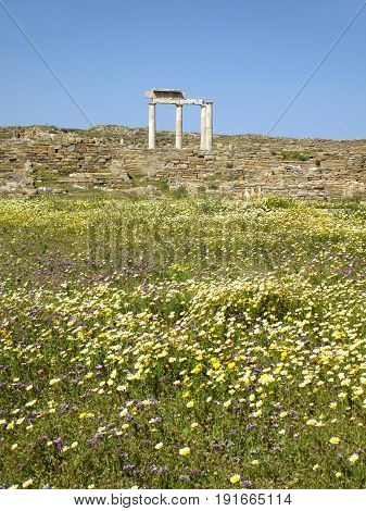 The Remains of Ancient Greek Temple on Wild Flower Field, Archaeological Site of Delos Island of Greece