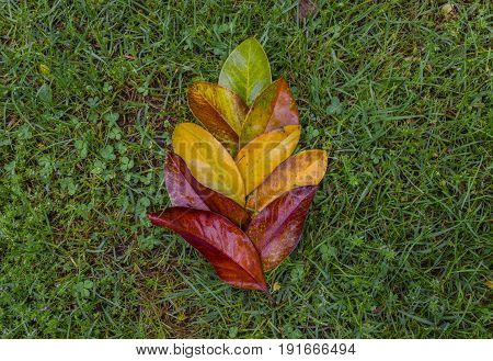 Gradient colored leafs arranged flower shape on grass