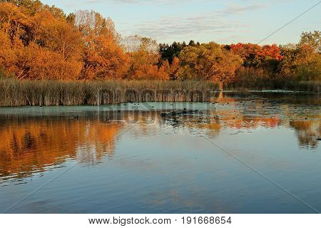 Autumn Colors and Coots on Medicine Lake in Plymouth Minnesota