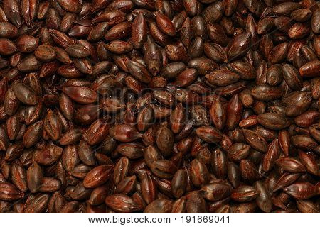 Chocolate Malted Barley, Grain, Texture, Background, Ingredient