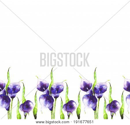 Bouquet of purple Calla lilies watercolor. Buds with leaves on white background. Hand-drawn violet flowers. Seamless pattern for design, decor, clothing, dresses, textiles, paper, greeting cards
