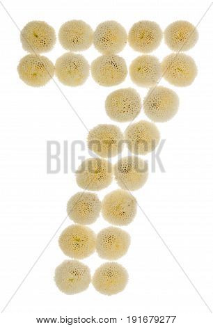 Arabic Numeral 7, Seven, From Cream Flowers Of Chrysanthemum, Isolated On White Background