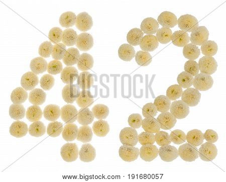 Arabic Numeral 42, Forty Two, From Cream Flowers Of Chrysanthemum, Isolated On White Background