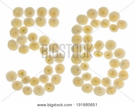 Arabic Numeral 56, Fifty Six, From Cream Flowers Of Chrysanthemum, Isolated On White Background