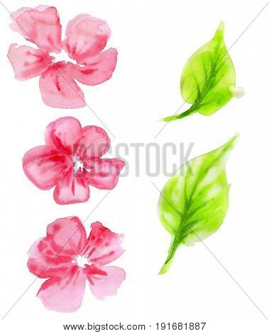 Set of decorative flowers, leaves for design. Watercolor illustration.