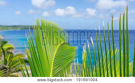 Bright green and yellow coconut palm frond in tropical scene over ocean distant horizon and below sky.