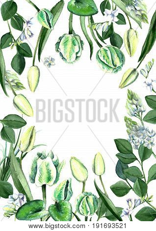 Watercolor hand drawn white and green tulips, freesia, eucalyptus, lilly leaves and cyclamen bouquet. Decorative floral composition for wedding design. Painted by wtercolor floral frame.