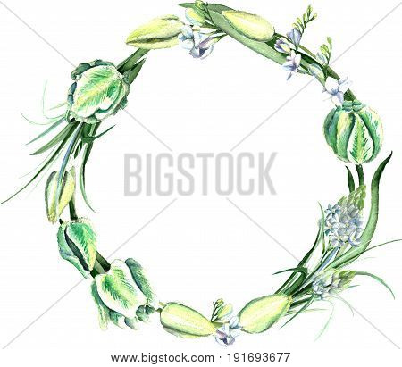 Watercolor hand drawn white and green parrot tulips, freesia, ornithogalum, lilly leaves wreath. Decorative floral composition for wedding design. Round frame for your design.