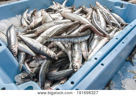 Anchovies On Ice At The Fish Market