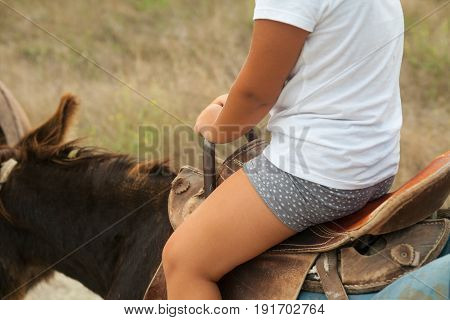 In the frame a donkey a saddle a rider is a child. Color white brown gray