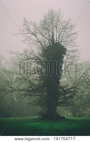 Strange single tree in the morning mist, moody natural hipster background