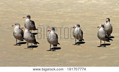 Gray Seagulls on Beach Sand Looking Left