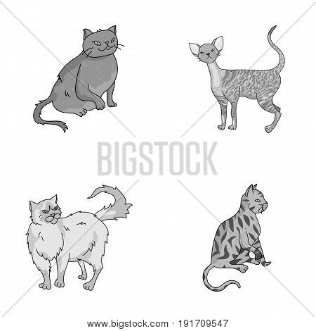 Persian, Cornish rex and other species. Cat breeds set collection icons in monochrome style vector symbol stock illustration .