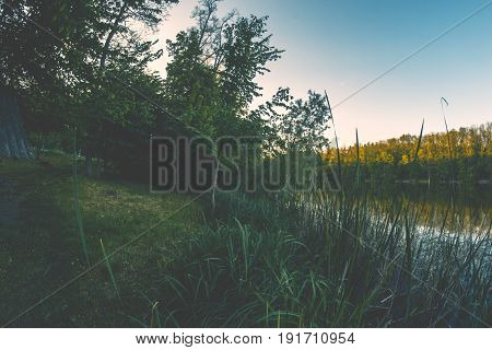 Evening summer green forest gloomy fisheye landscape
