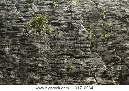 Detail of pancake rock in Punakaiki, Paparoa national park, New Zealand