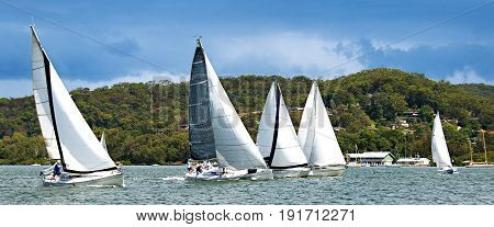 Five monohull sailing yachts racing on Brisbane Water Gosford against a hilly tree studded horizon backdrop. Central Coast New South Wales Australia.