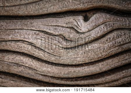 Closeup macro abstract texture background of old vintage wood oak tree bark wooden pattern waves