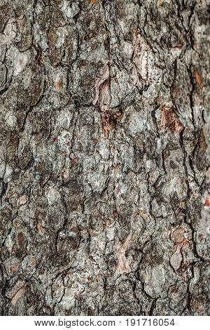 Closeup macro abstract organic texture background of old vintage wood oak tree bark wooden pattern with cracks