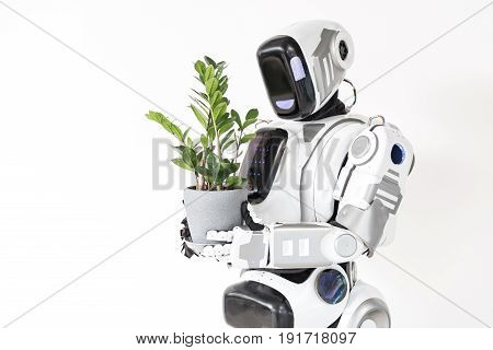 Concept alive and artificial. Big robot is holding flower pot and looking at herb with love. Isolated background