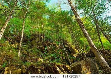 trees grow on the rocky slope, many large stones and above them the forest. on a warm sunny day