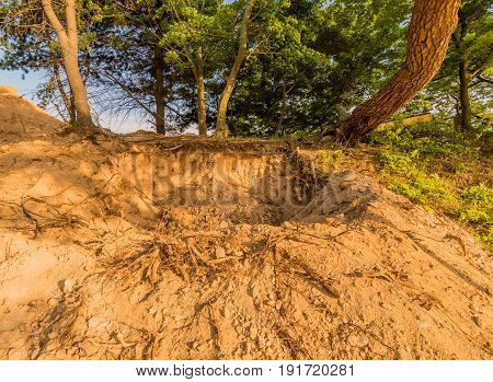 Large hole in the ground where a tree has been uprooted surrounded green foliage.