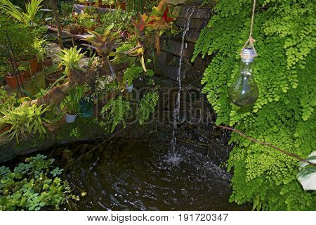a small waterfall, water flows into the pond with fish, the Clothesline hanging light bulbs. Botanical Garden
