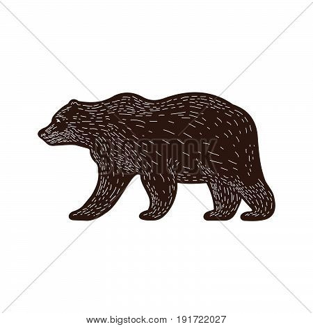 Funny brown bear on background of forest. Brown bear walking on grass in forest. Animal adorable brown bear vector character. Charming brown bear. Wildlife character