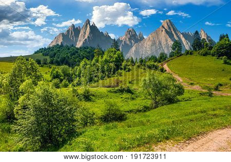 Forest On Grassy Hillside In Tatras