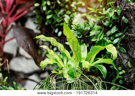 Ornamental plants in pots with nature after rain.