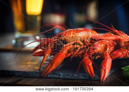 Crawfish. Boiled red crayfish or crawfish with a beer and herbs on a slate table. Close up. Crayfish party, restaurant, cafe, pub menu