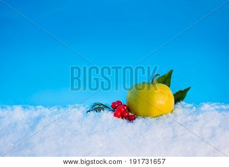 yellow delicious Christmas apple berries of viburnum and leaves in snow with before Christmas in sunny winter afternoon against the blue sky