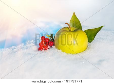 yellow delicious Christmas apple leaves and berries of viburnum in snow with before Christmas in sunny winter afternoon