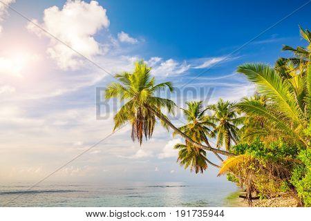 Beautiful palm trees on maldivian beach