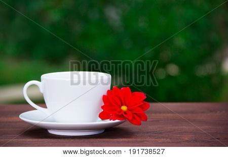 White cup and saucer and red flower on a green background. A cup of tea and a flower against the backdrop of a summer garden. Romantic concept. Copy space