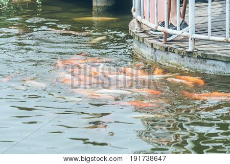 Close-Up Of Koi Carps Swimming In Water.