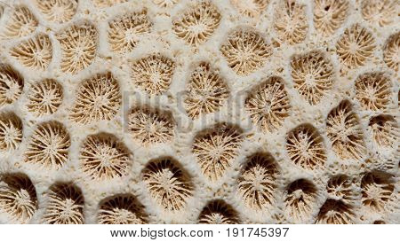 closeup of coral fissil texture