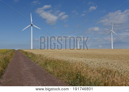 Wind turbines in wheat field under cloudy sky