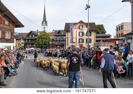 The Annual Rural Transhumance Parade Of Kerns